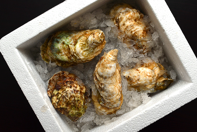 oysters1_boathousetraversecity_acookscanvas-copyright2012-2017_71