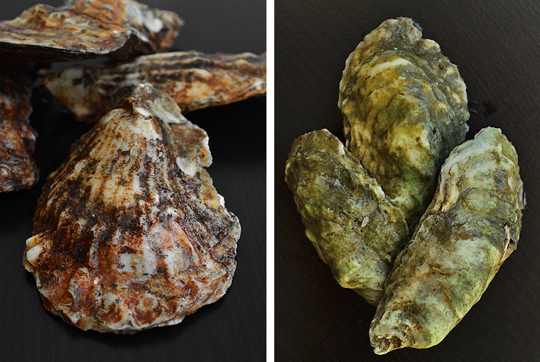 oysters3_boathousetraversecity_acookscanvas-copyright2012-2017_71